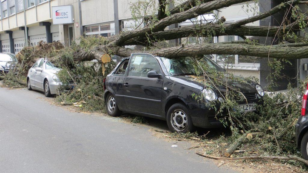 עץ על אוטו